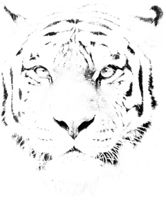 BW Tiger edit